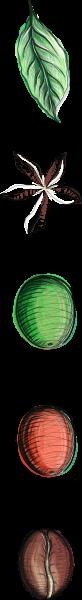 ciclo de vida da planta ao grão - computador (1)